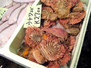 EF Tsukiji Fish Market, Day 1, Slipper Lobsters