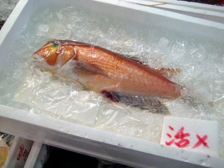 EF Tsukiji Fish Market, Day 1, Maybe Golden Snapper