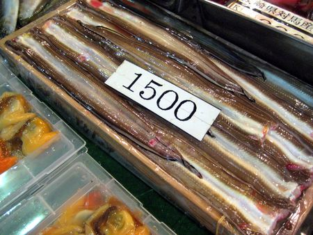 EF Tsukiji Fish Market, Day 1, Flat Fish