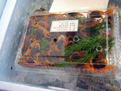 EF Tsukiji Fish Market, Day 1, Tiny Live Crabs