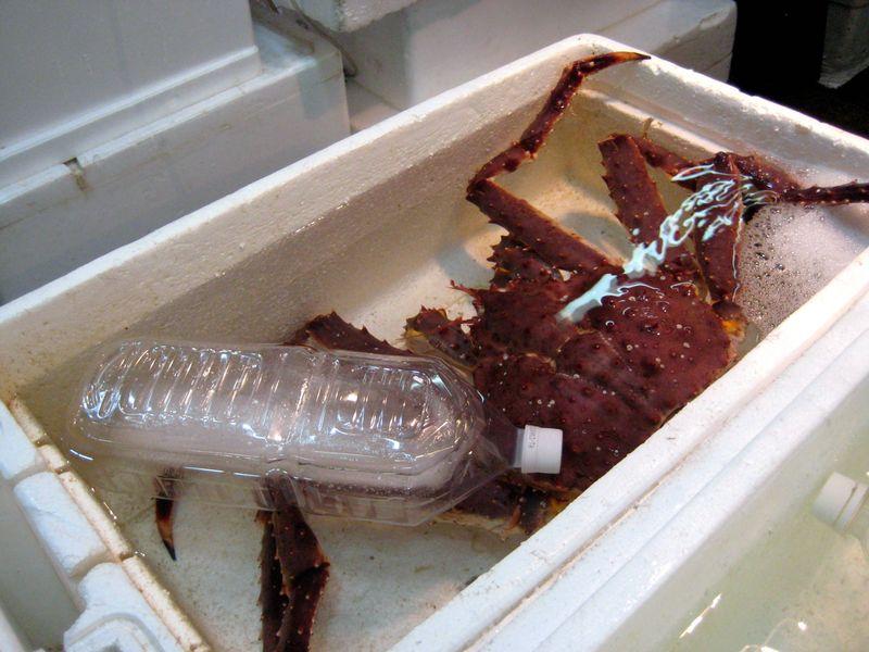 EF Tsukiji Fish Market, Day 2,  Live King Crab